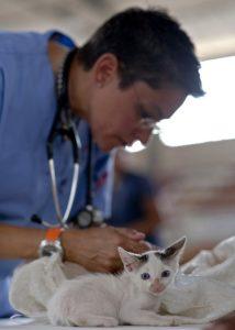 Que hace un veterinario
