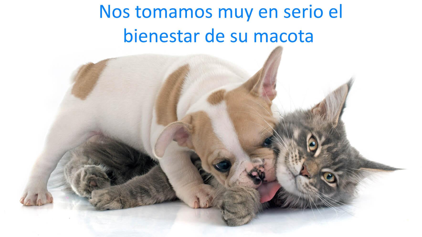 Clínica veterinaria en Tulancingo